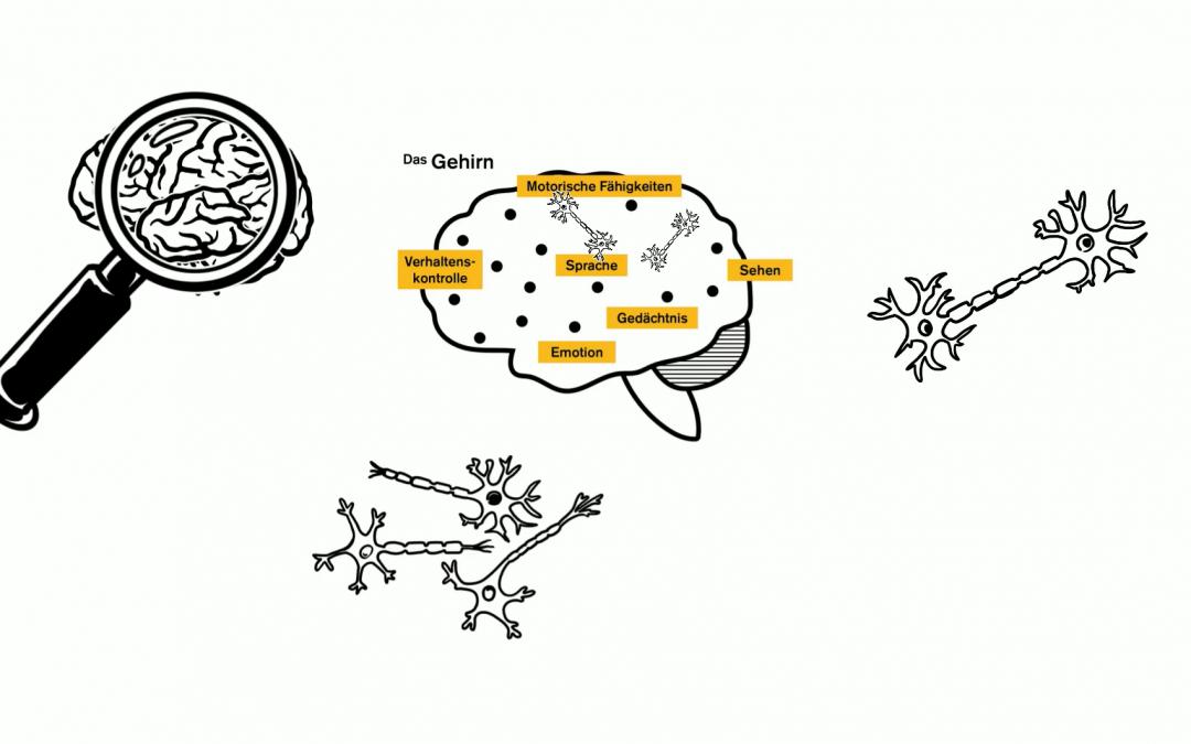 Drei neue Erklärvideos zu toxischem Stress und sozial-emotionalen Lernen